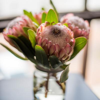 Einfach Protea